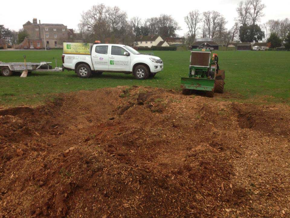 After Stump Removal Hartwood Treeworks