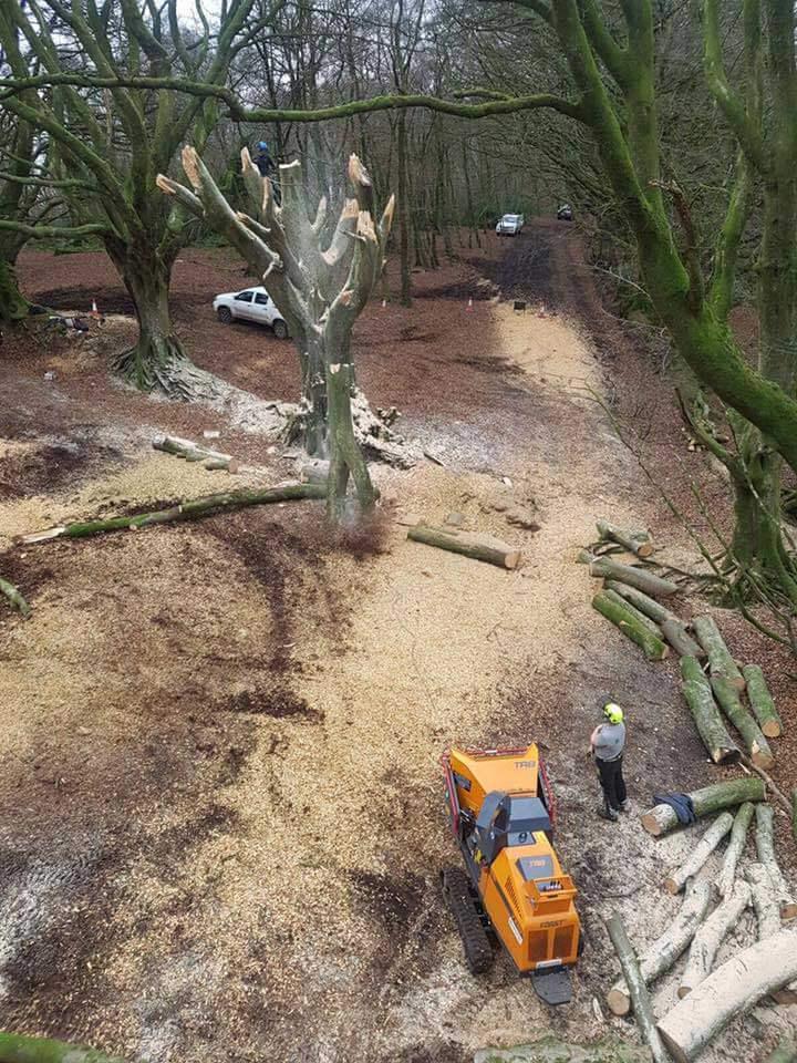 Hembury Site Clearance Hartwood Treeworks