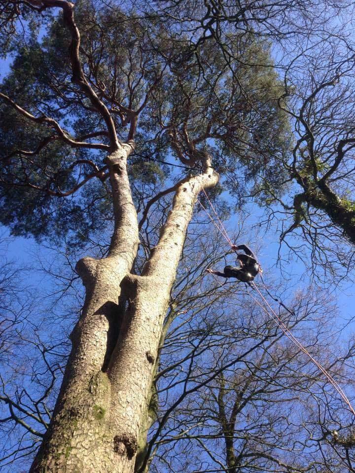 Tree Surgery Hartwood Treeworks