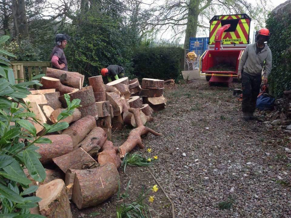Stump Removals Hartwood Treeworks