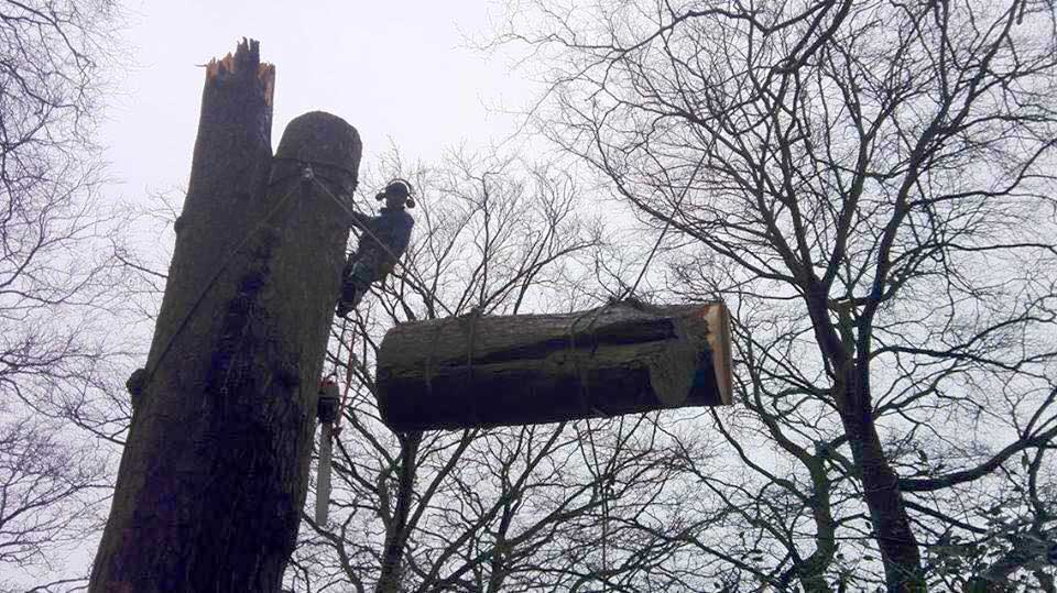 Large Tree Removal Hartwood Treeworks