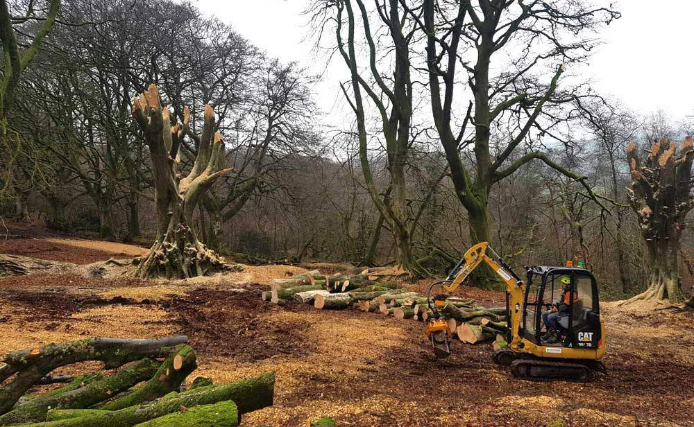 site clearance on heritage site Hartwood Treeworks