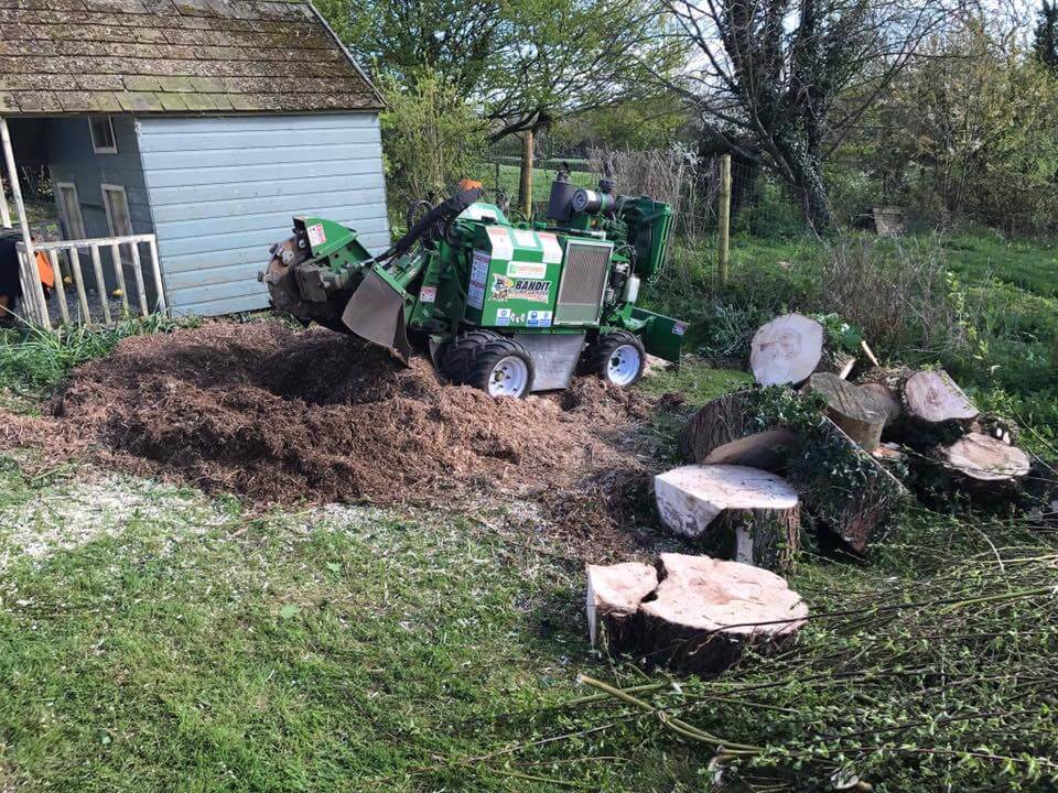 Home tree stump removal