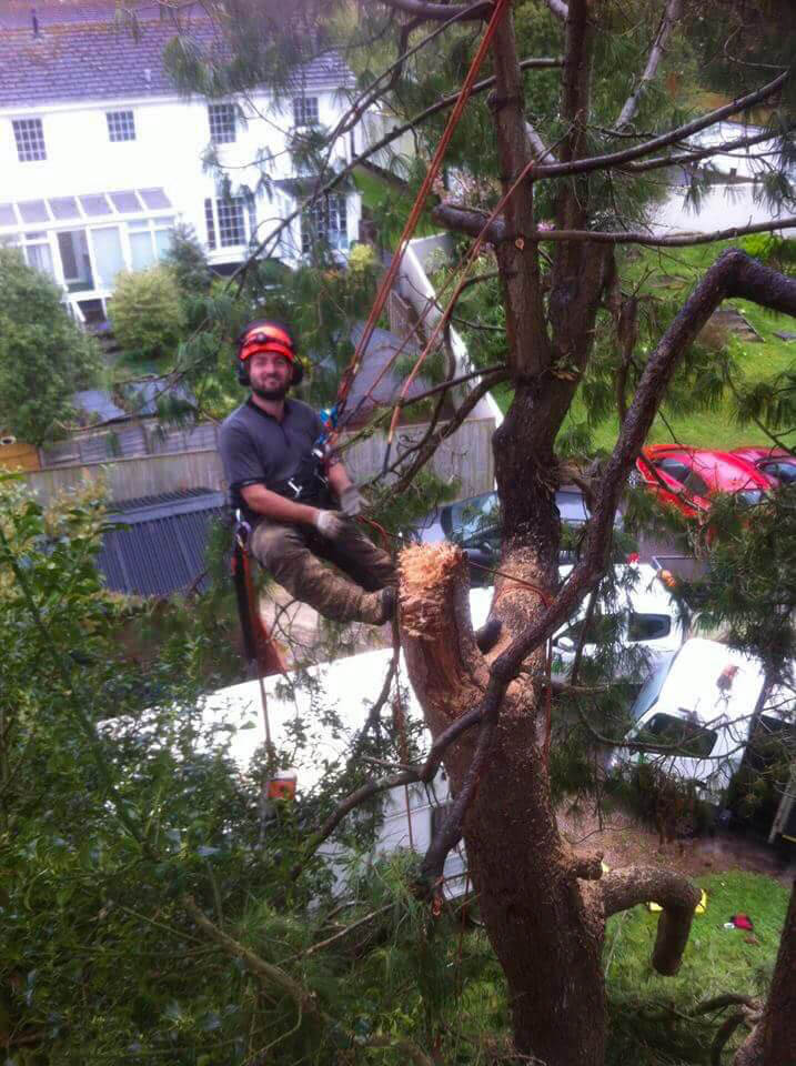 Domestic tree surgery