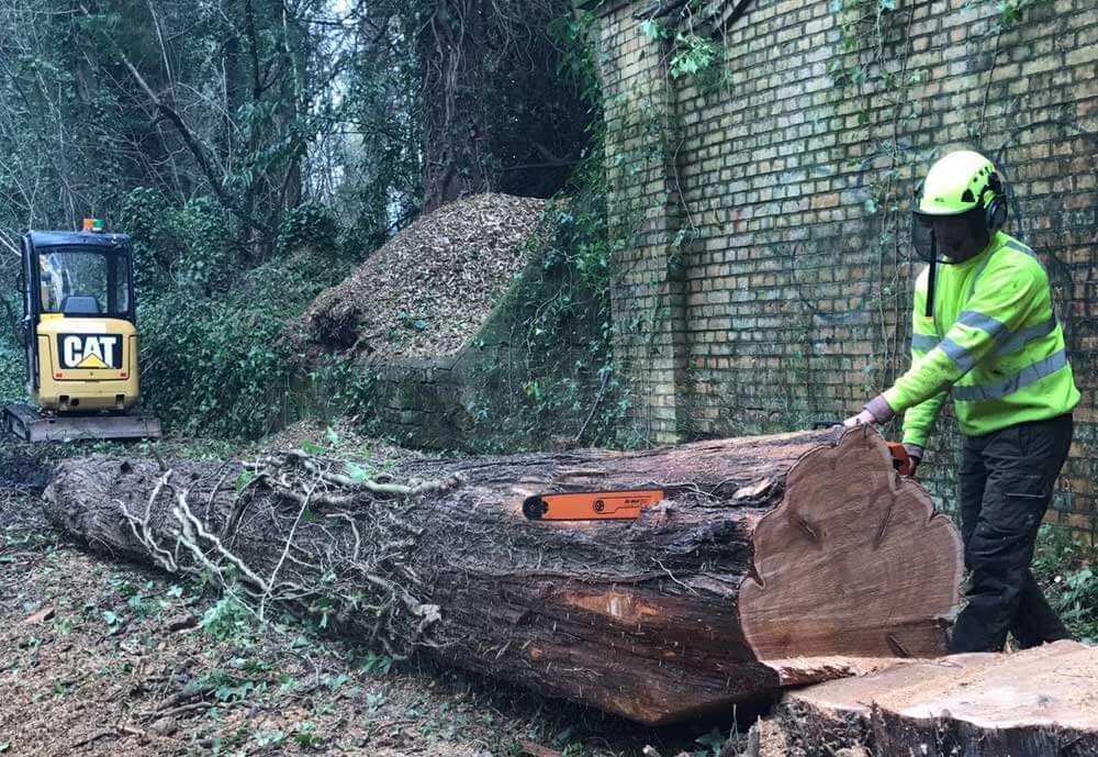 Fallen Tree Removal Hartwood Treeworks