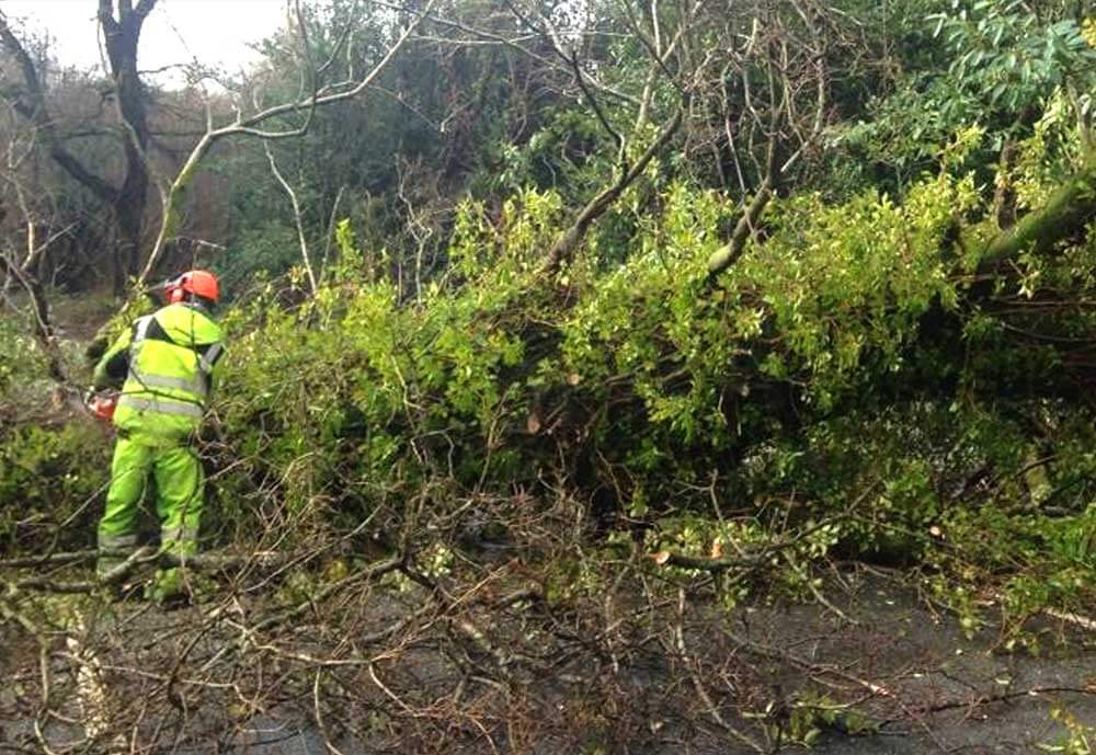 24 hour emergency call out Hartwood Treeworks